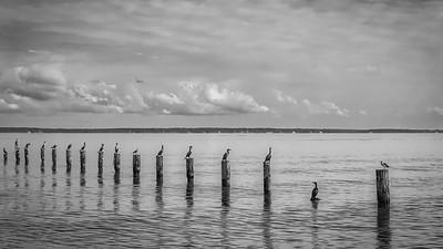 Bird Row