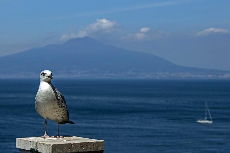 Gull & the Sea