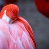 Flamingo 7