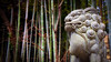 Bamboo Forest Lion