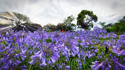 Kannonzaki Garden 2