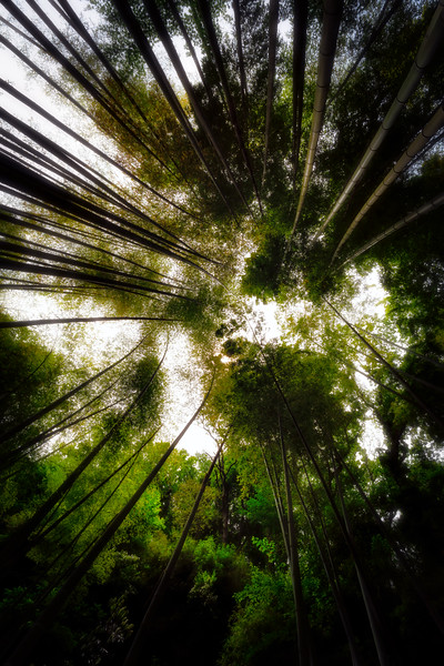 Bamboo Tree Forest 2