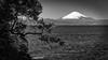 Fuji and Sagami Bay