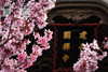 Blossoms in Kamakura