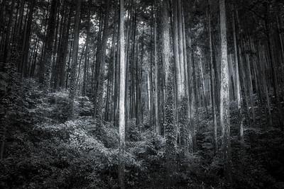Odawara Forest 2