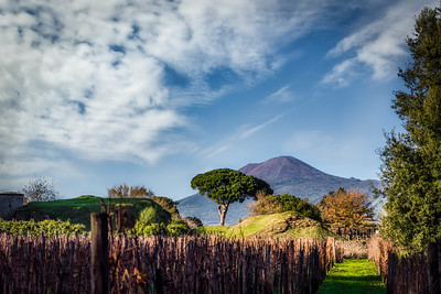 Vesuvius and the Vineyard