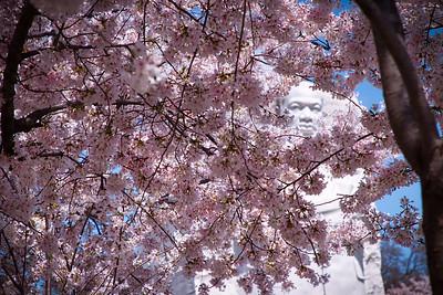 Blossoms at MLK