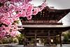 Blossoms in Kamakura 2