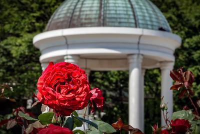 VP Garden 1