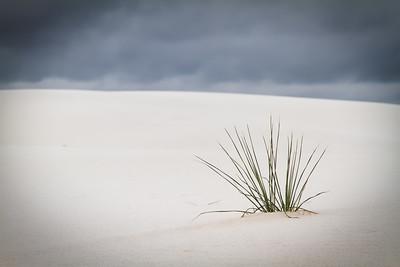 Solo Plant