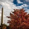 Autumn in DC 2