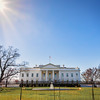 White House Rays