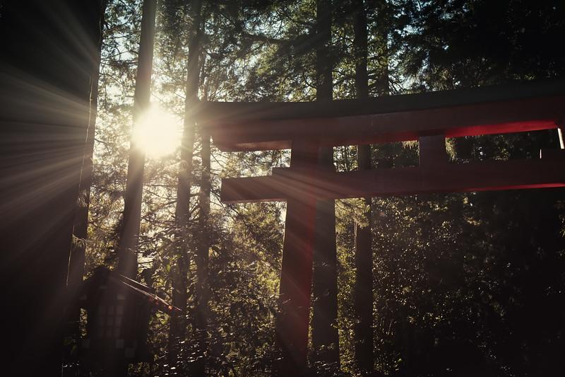 Hakone Torii 5
