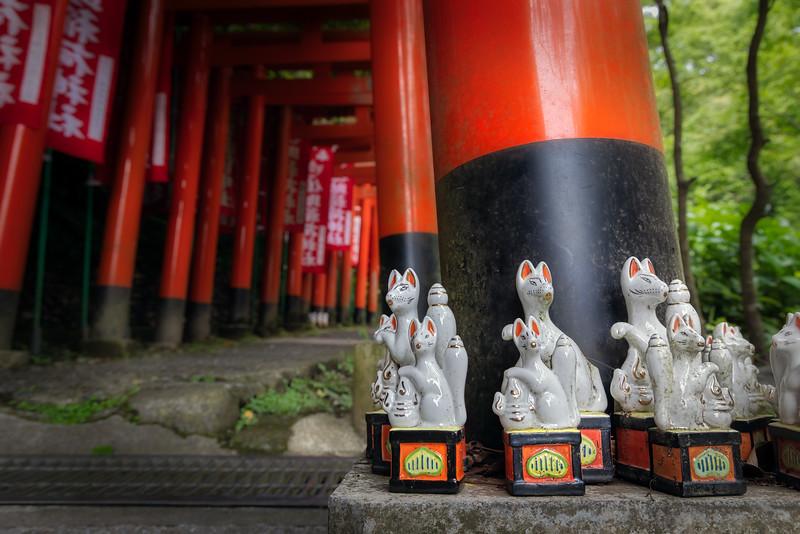 Sasuke Foxes 2