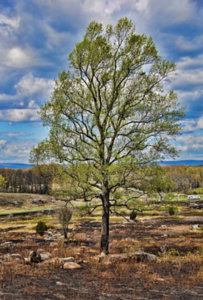 Little Round Top and the Valley of Death After Controlled Burn by Jim Wissert