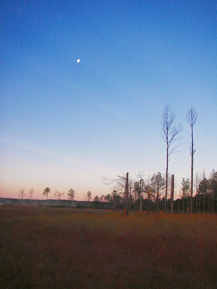 Early morning moon over Hopkins Prairie<br /> PHOTO by Deb Blick