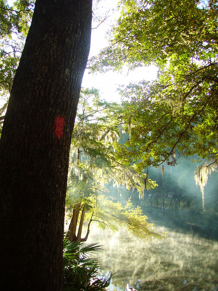 BEST OF SHOW<br /> Early misty morning upon the Suwannee River<br /> <br /> PHOTO by Kristen Johns