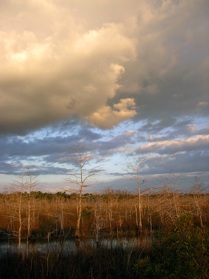 THIRD PLACE: GOOD NATURE<br /> <br /> Big Cypress Storm Brewing<br /> PHOTO BY Ian Brown