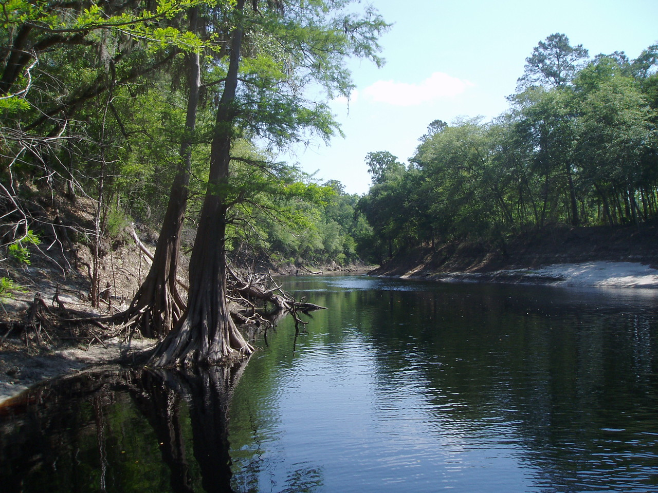 Along the Suwannee River <br /> PHOTO by Jeffrey Hunter