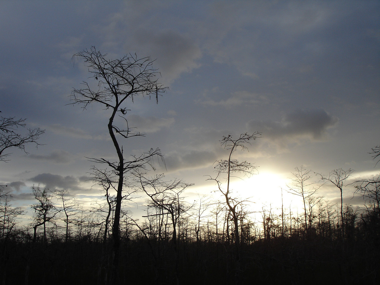 Sunrise along the Loop Trail, Big Cypress<br /> PHOTO by Eric Labor