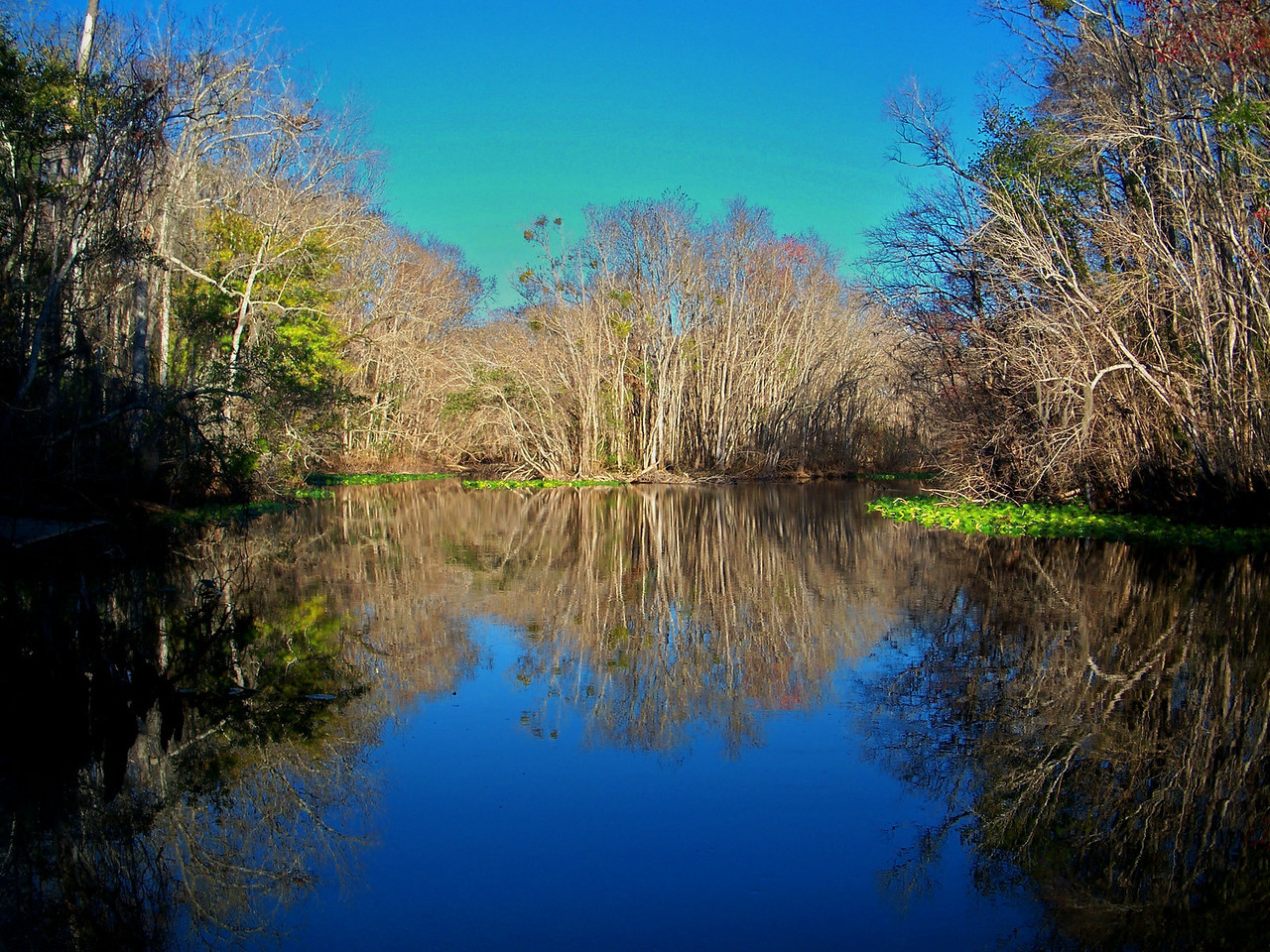 Ocklawaha River<br /> PHOTO by Merritt O'Brien