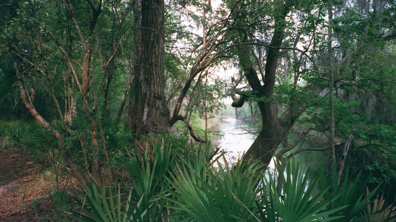 A southern look of the Suwannee while standing on the Florida Trail is framed by trees<br /> PHOTO by Marcus Garrett