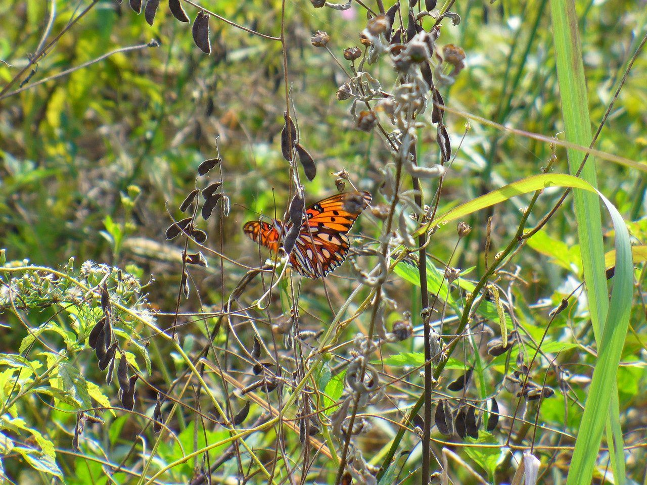 Butterflies keeping us company on the Trail<br /> PHOTO by Esther Muram