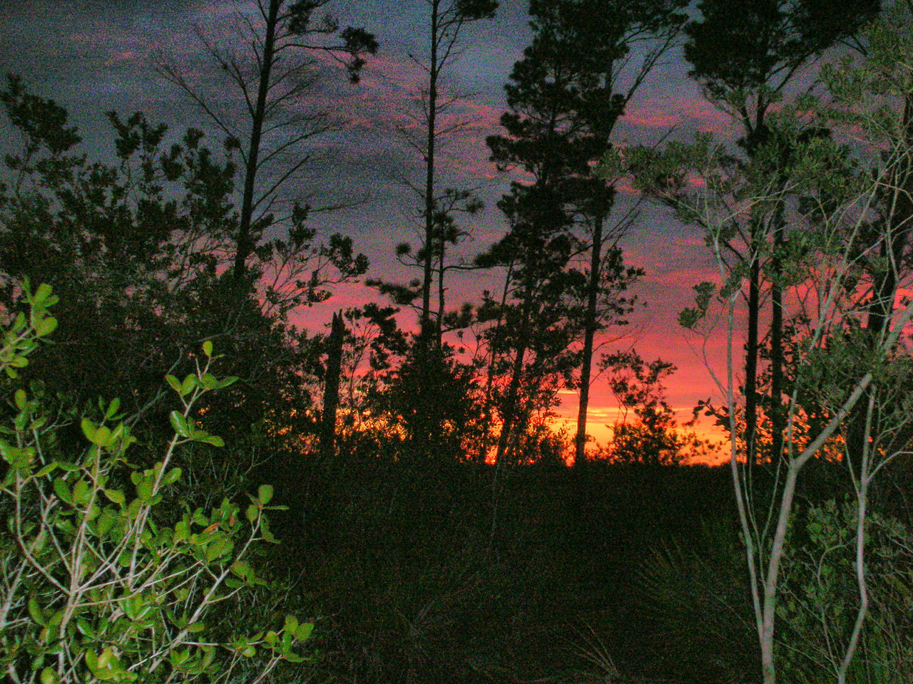 SECOND PLACE: TRAIL MOMENTS<br /> <br /> Sunrise at Little Scrub Campsite in Bull Creek WMA<br /> PHOTO by Sue Turner