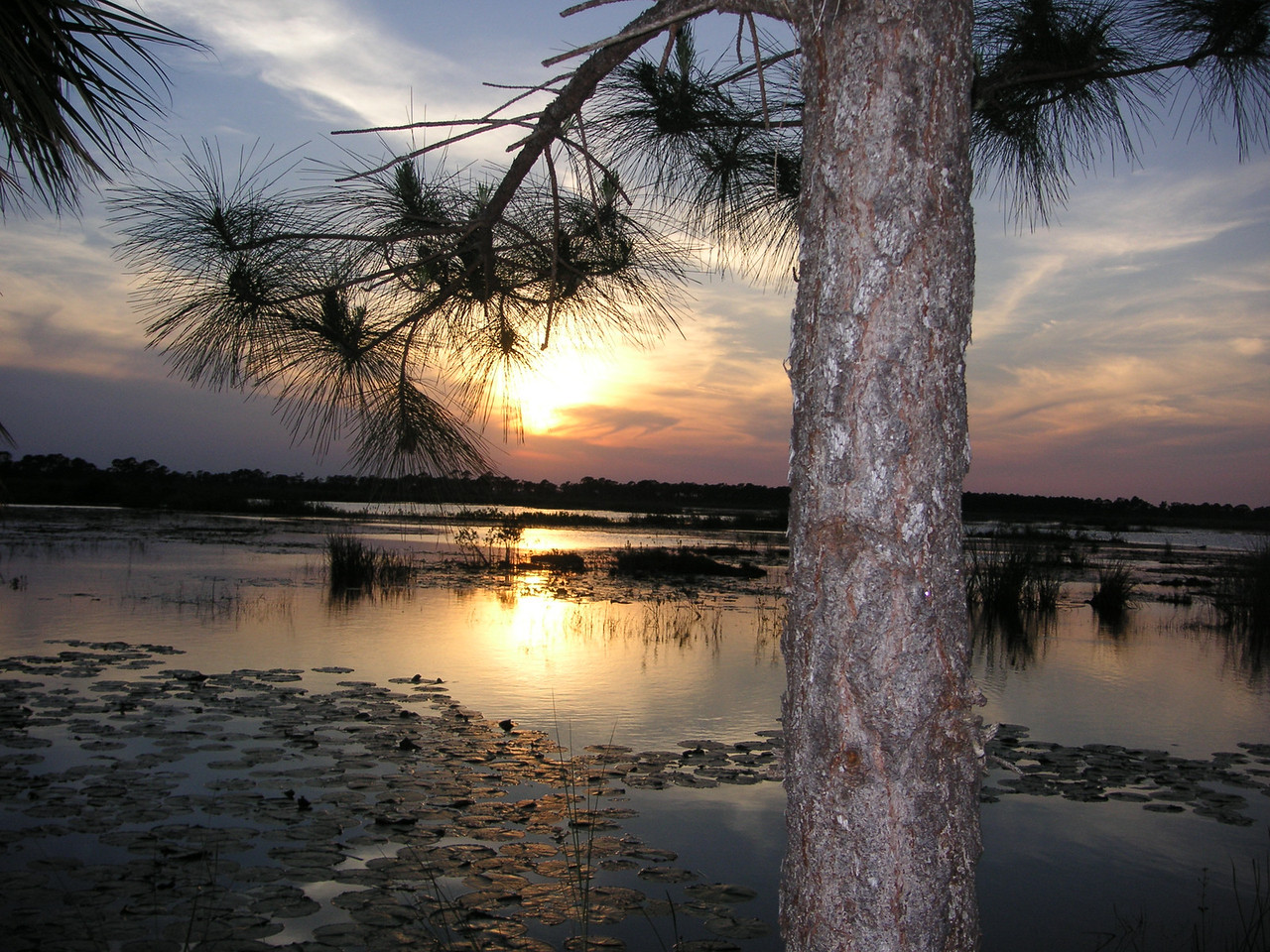 SECOND PLACE: GOOD NATURE<br /> <br /> Sunset at Hawk's Bluff Trail in the Savannas State Park in <br /> Jensen Beach on April 6, 2006 during the Tropical Trekkers annual dessert hike. <br /> PHOTO by Gretchen Dewey