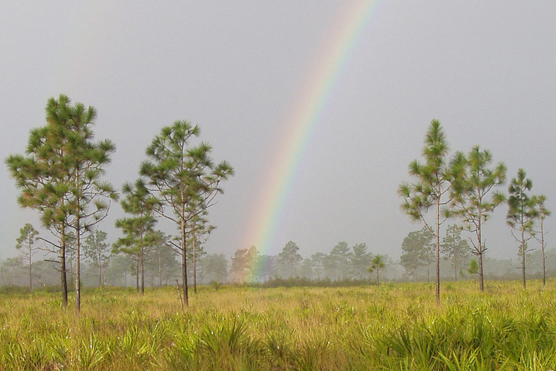 The pot of gold is at Triple N Ranch WMA<br /> PHOTO by Morena Cameron
