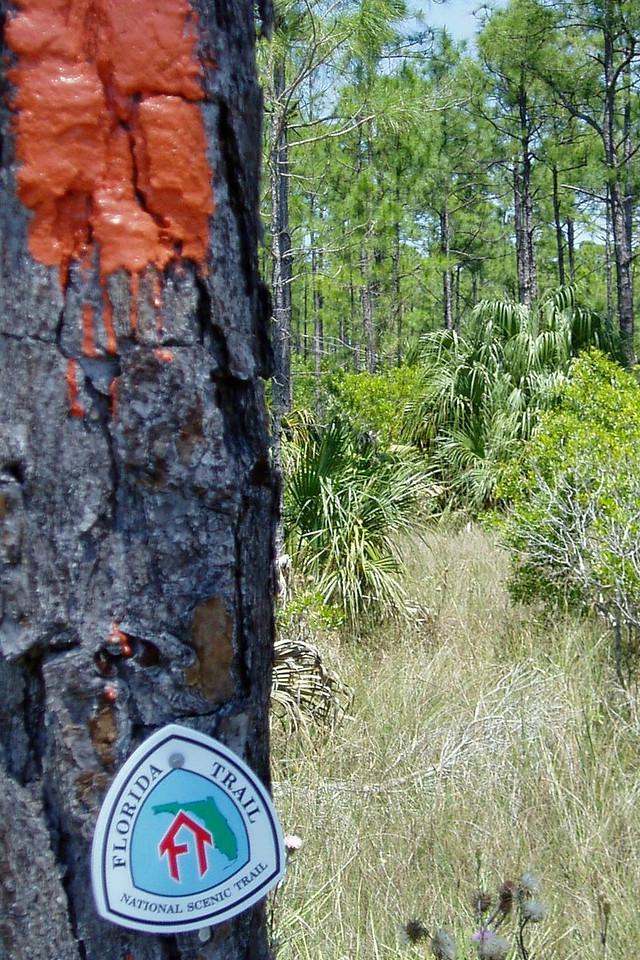 Fresh blazes in Big Cypress <br /> PHOTO by Bob Sugarman