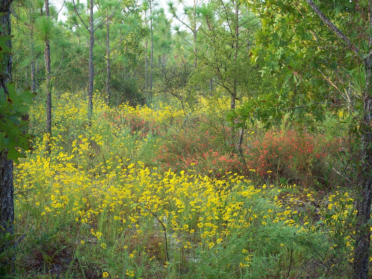 Fall colors on Eglin reservation <br /> PHOTO by Wallis Mayo