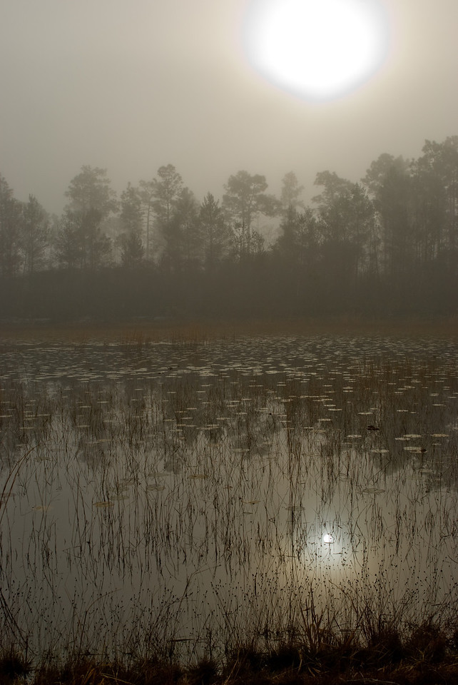 Foggy sunrise near Salt Springs<br /> Photo by Sandra Friend