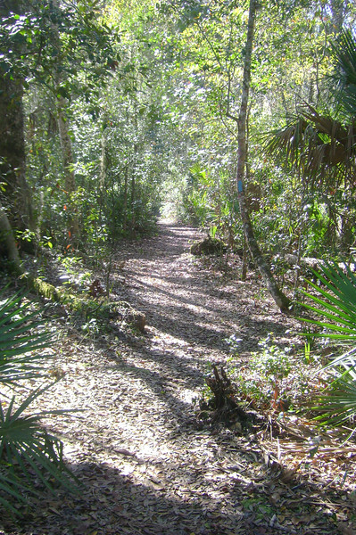 Meandering section of blue blazed cross trail, Daubenmire Trail, Flat Island Preserve<br /> Photo by James Manning