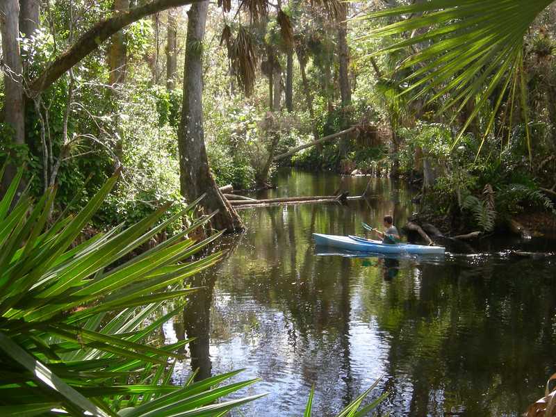 FIRST PLACE<br /> Loxahatchee River at Jonathan Dickinson State Park<br /> Photo by Winnie Lo