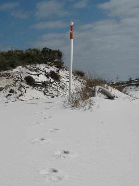 Footprint Cover 2010