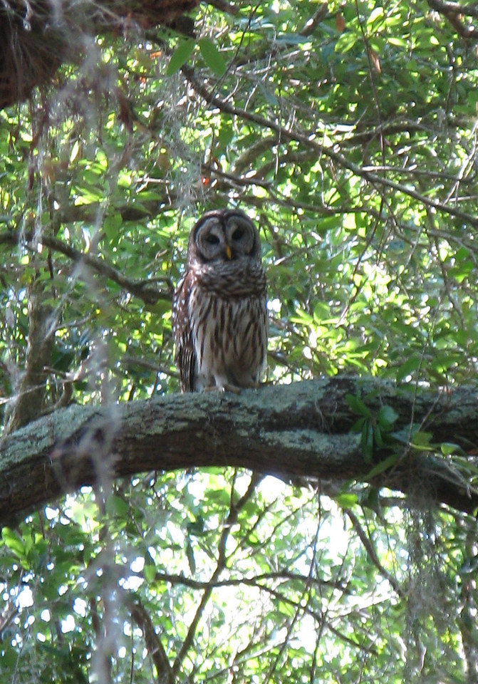 Owl at Three Lakes<br /> Photo by Mario Corazon