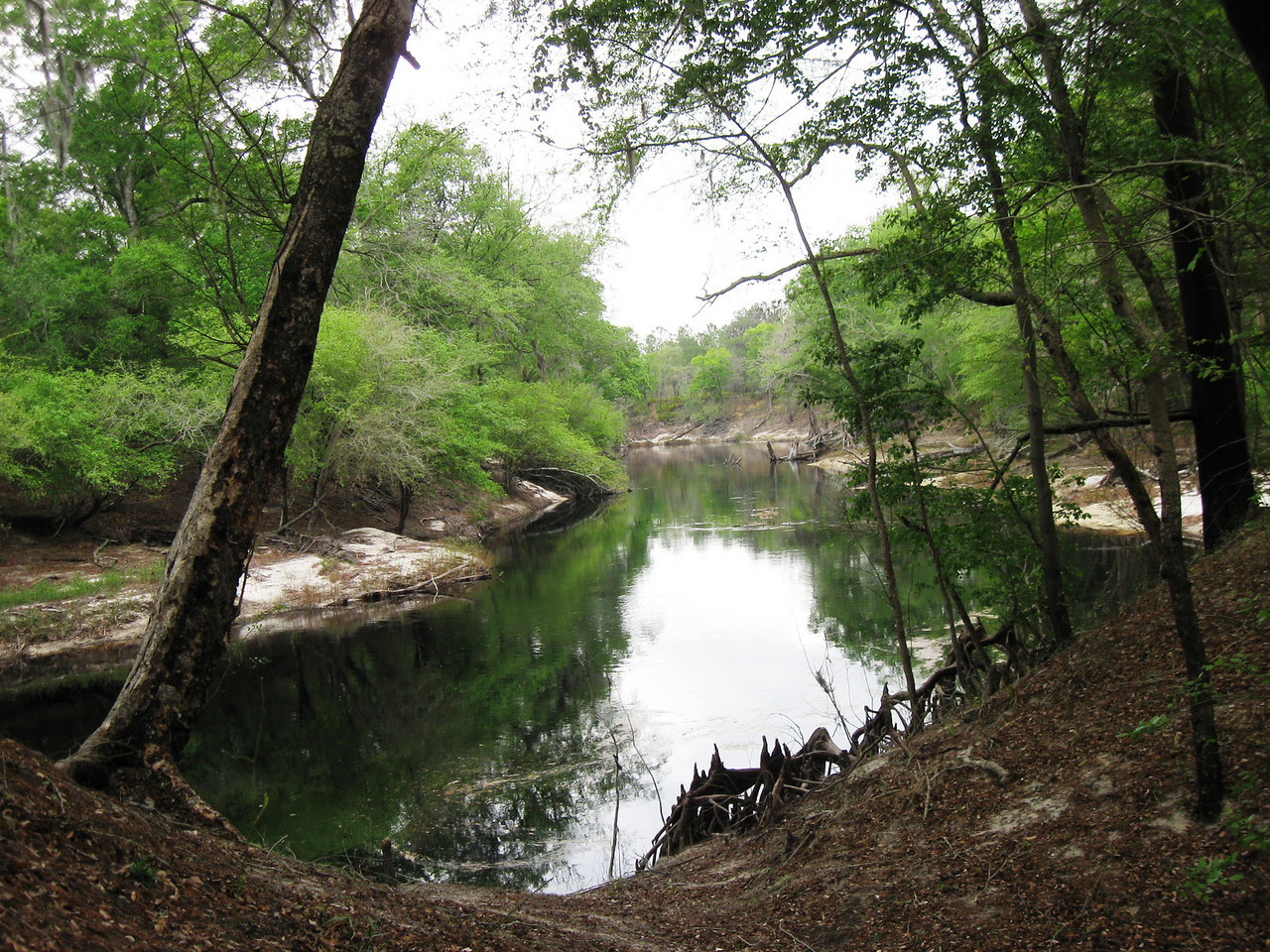Florida Trail along the Suwanee River,   Stephen Foster Folk Culture State Park<br /> Photo by Lisa Meyers
