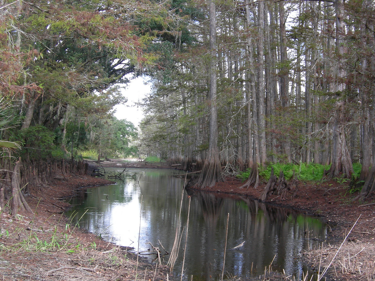 Fisheating Creek<br /> Photo by Winnie Lo