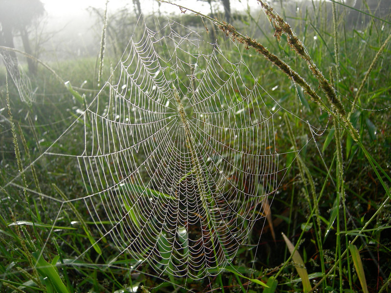 Cobweb on Fisheating Creek hike<br /> Photo by Winnie Lo