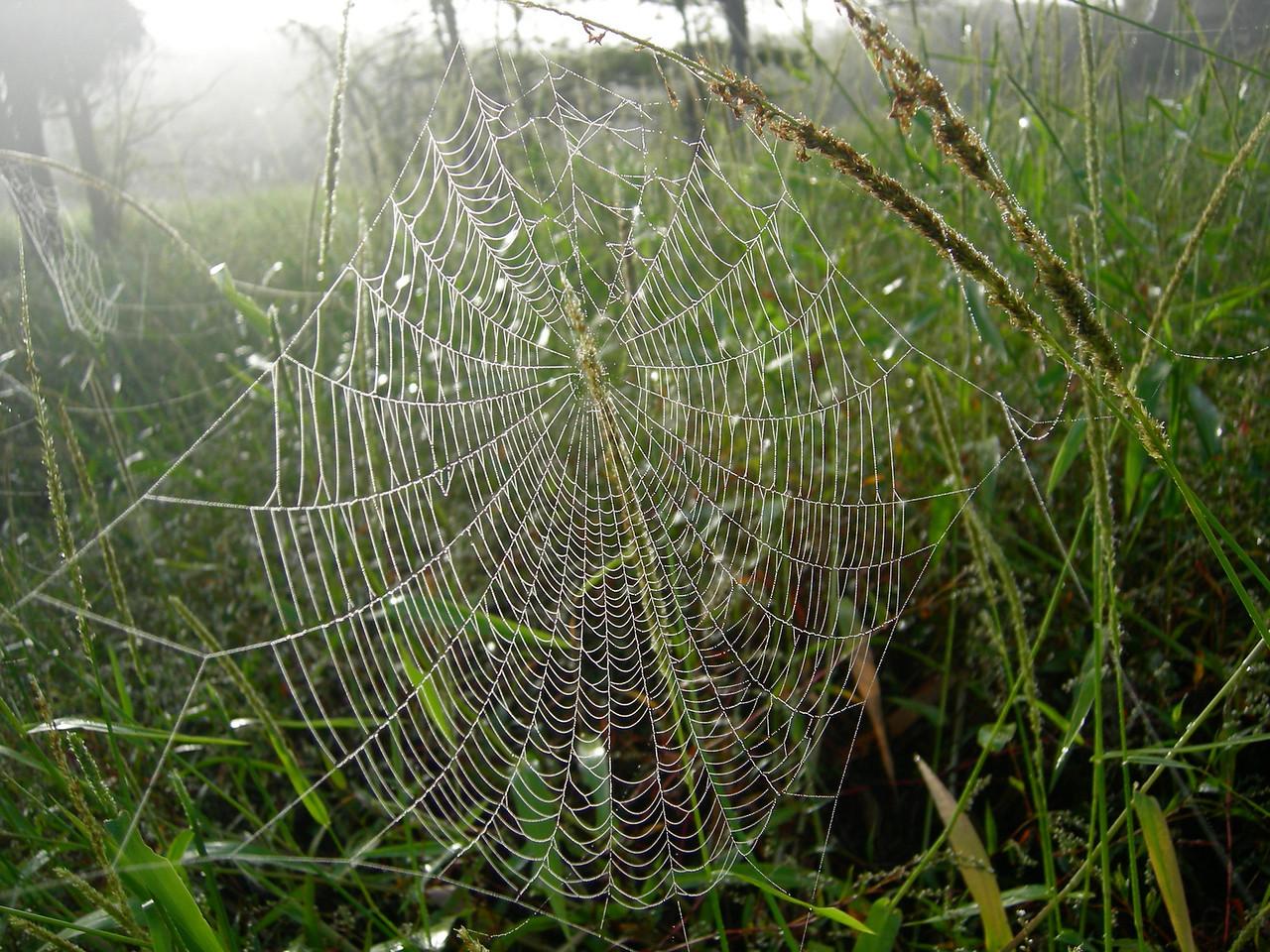 Cobweb on Fisheating Creek hike<br /> Photo by Winnie Lo