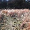 Prairie Trail
