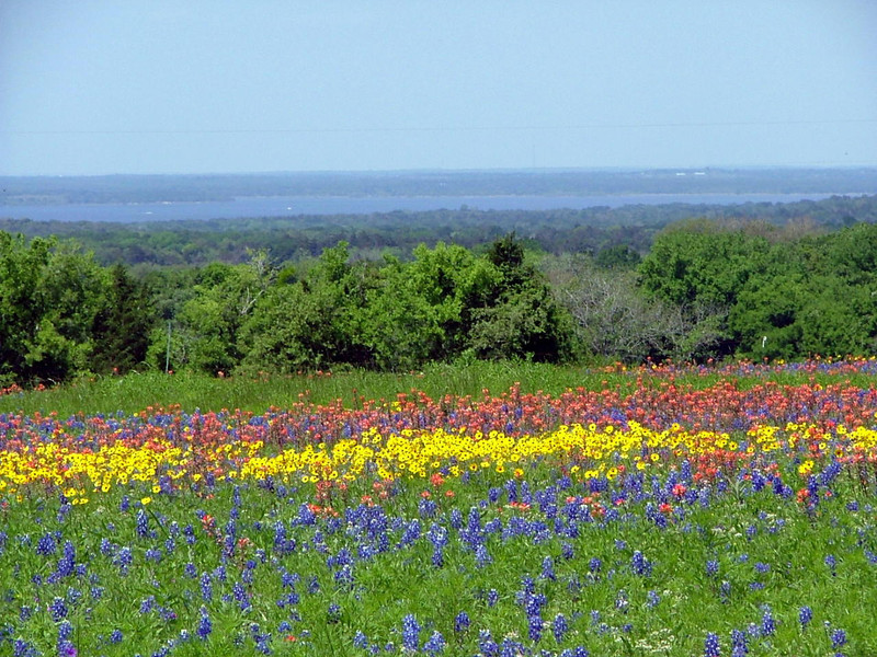 Wildflowers in Spring