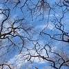 Post Oak Sky