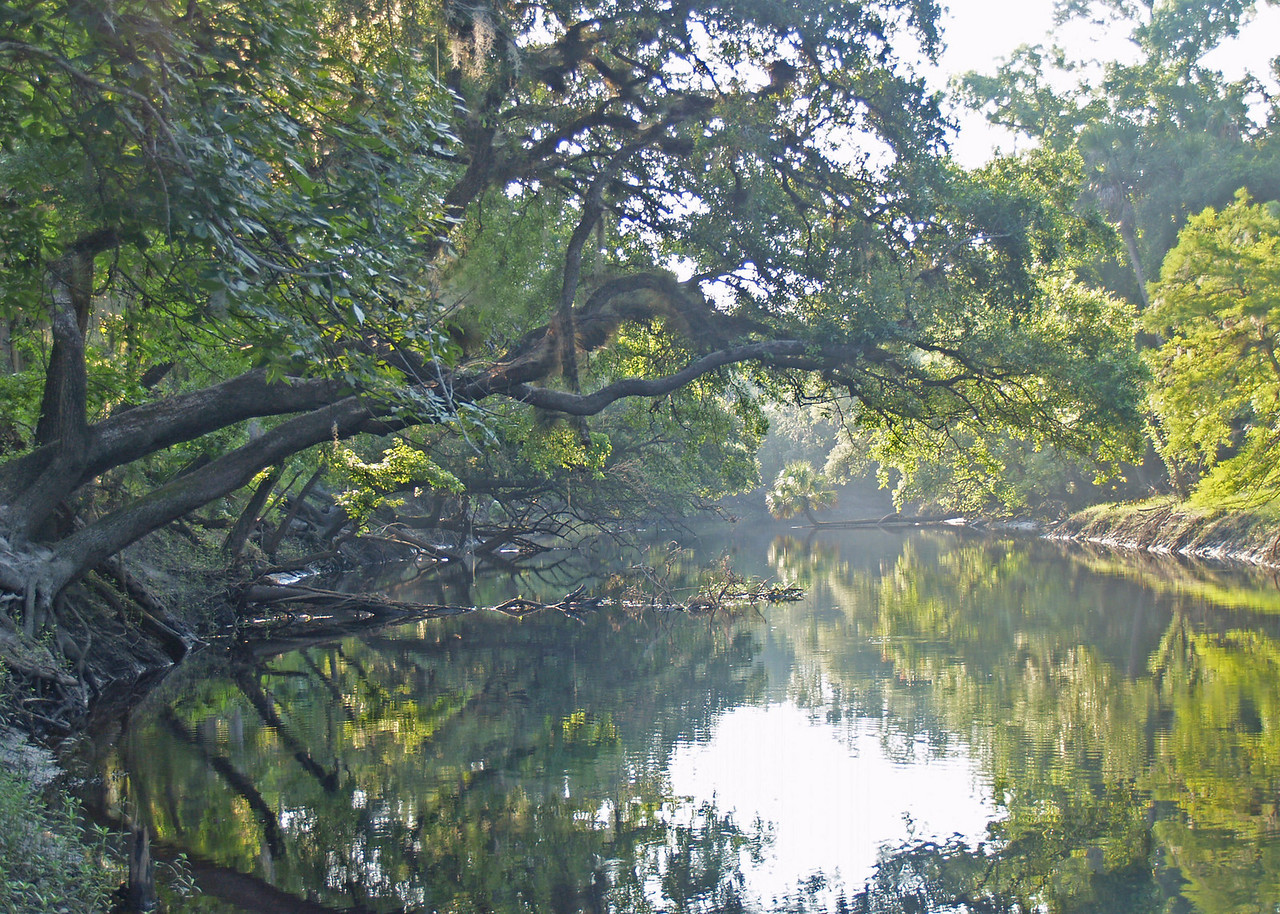 Misty Morning on Econlockhatchee River<br /> Photo by Douglas Sphar