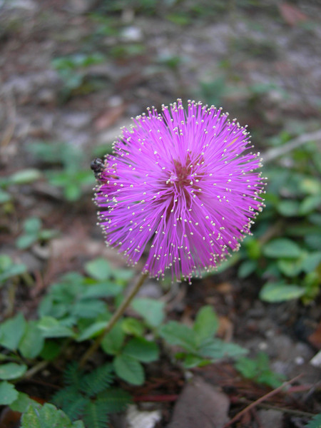 Flower from Fisheating Creek campground<br /> Photo by Winnie Lo