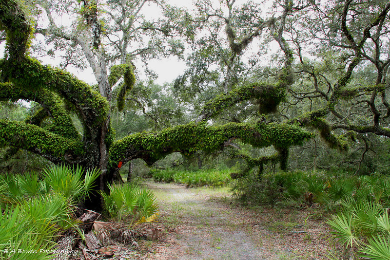 Croom River Trail, Withlacoochee State Forest<br /> Photo by Barbara Bowen