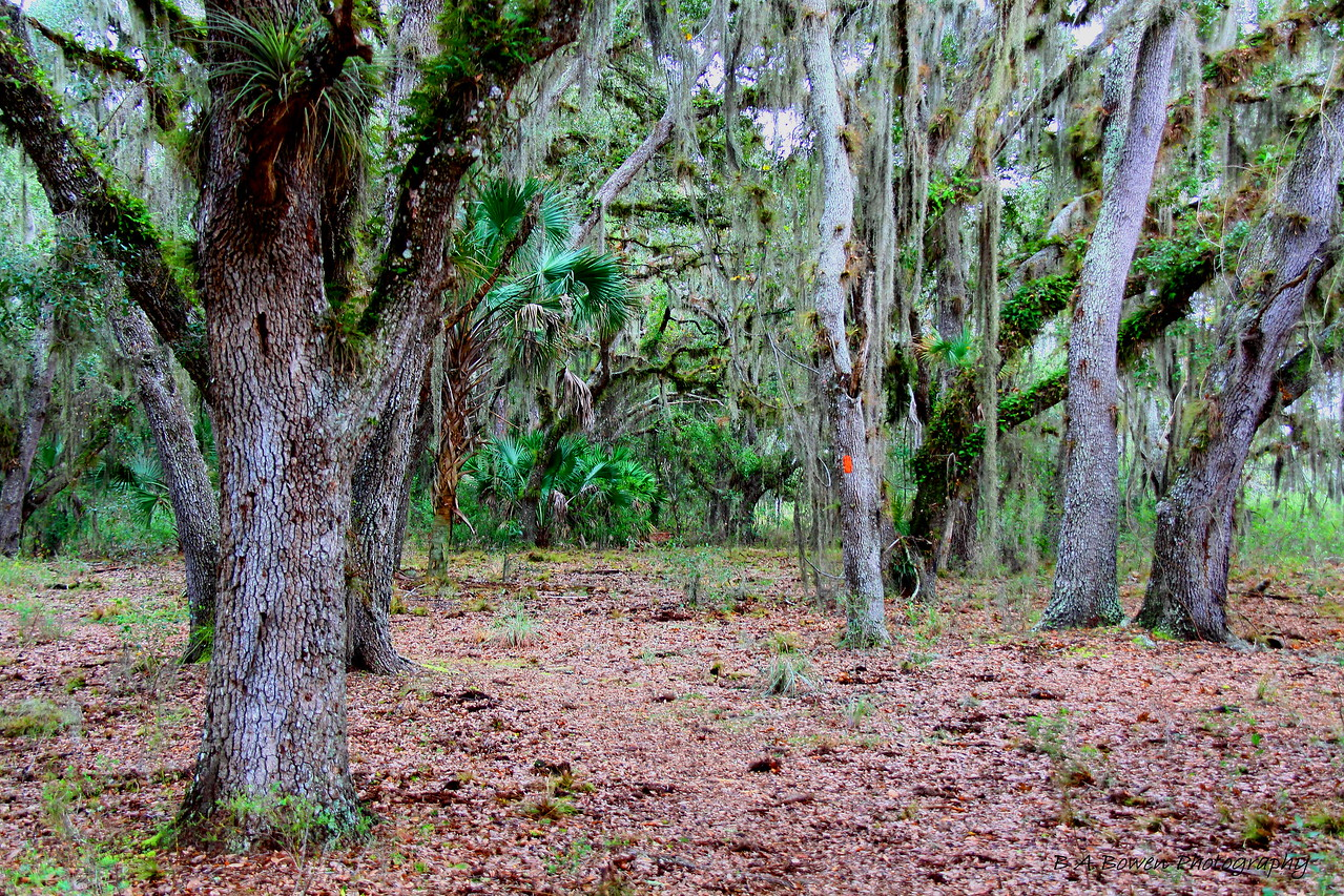 Bee Island Loop Trail, Myakka River State Park<br /> Photo by Barbara Bowen