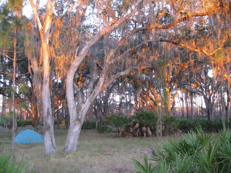 Golden Light on Campsite<br /> Photo by Esther Muram
