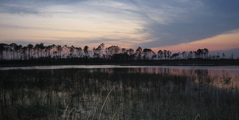 Sunset at Hidden Pond, Ocala National Forest<br /> Photo by Ann Roberts